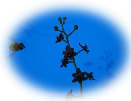 天山の花 016