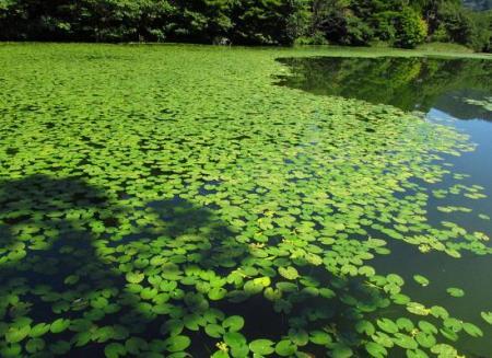 麻生池 117