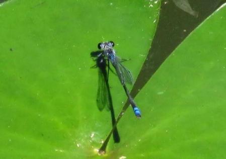 麻生池 123