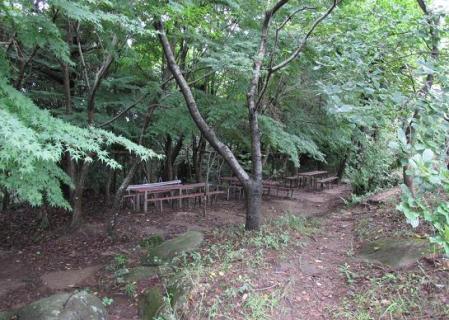 小岱山 キノコ 079