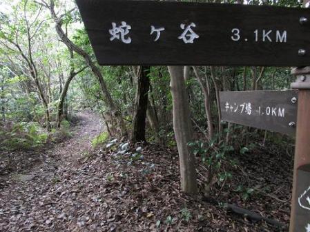 小岱山 キノコ 208