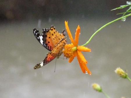 公園の蝶 055