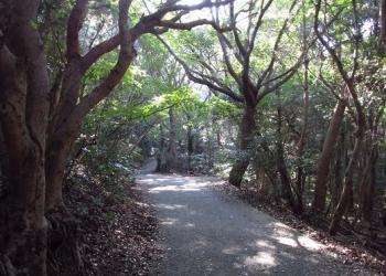 松尾ちゃんと登る清水山 071