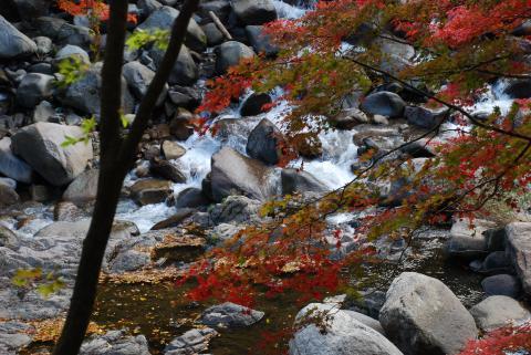 夏井川渓谷2