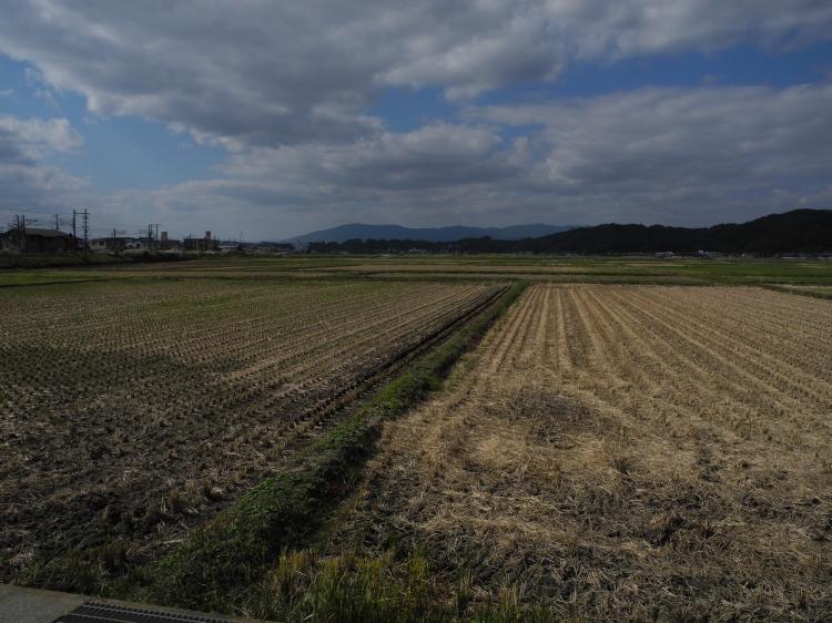 神谷米-田園風景