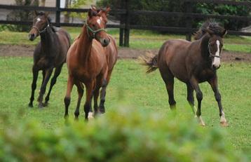 9・雨・牝馬4頭