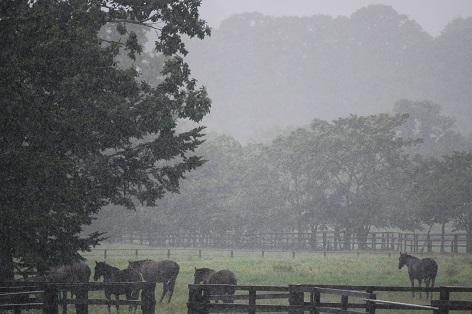 9・雨・繁殖牝馬たち