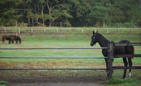 9・牡牝・牝馬は