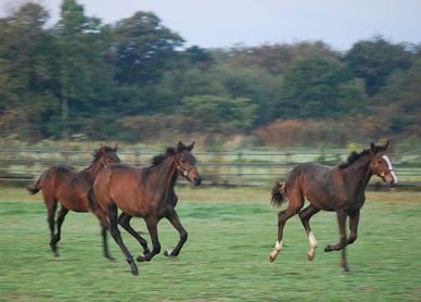 10・移動・牡馬3頭