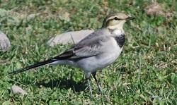 10・秋・1年目の若鳥