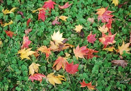10・思い出・色鮮やかな葉