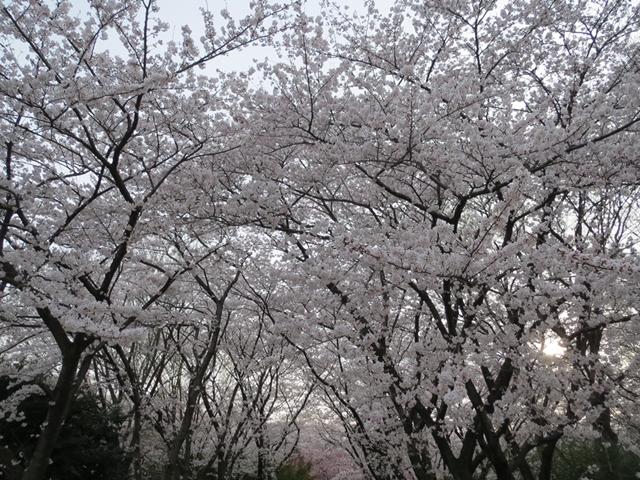 002_2013-04-02.jpg