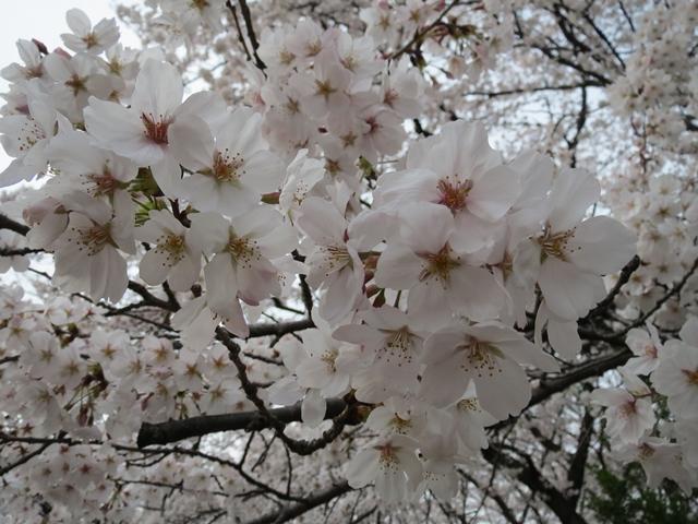 003_2013-04-02.jpg