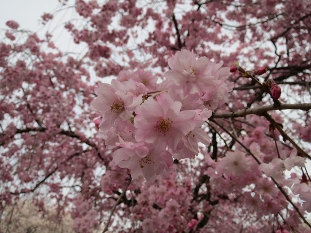 006_2013-04-02.jpg