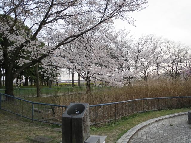 008_2013-04-02.jpg