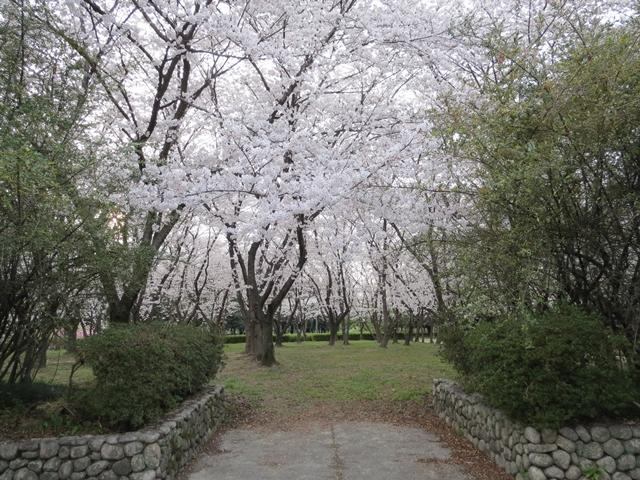 010_2013-04-02.jpg