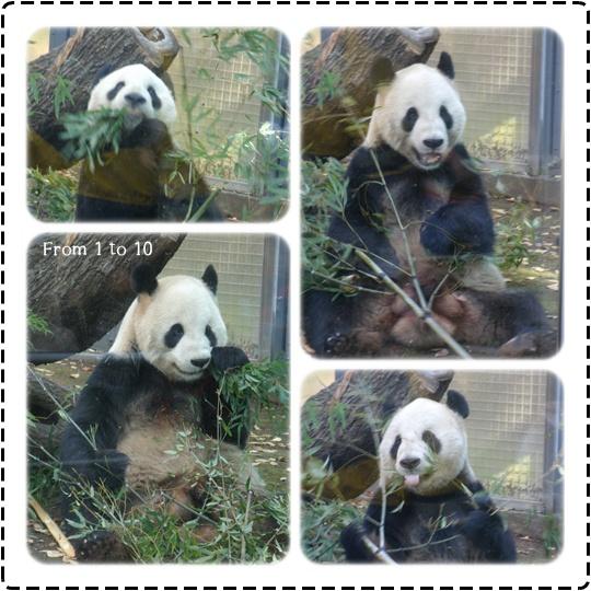 201212上野動物園①