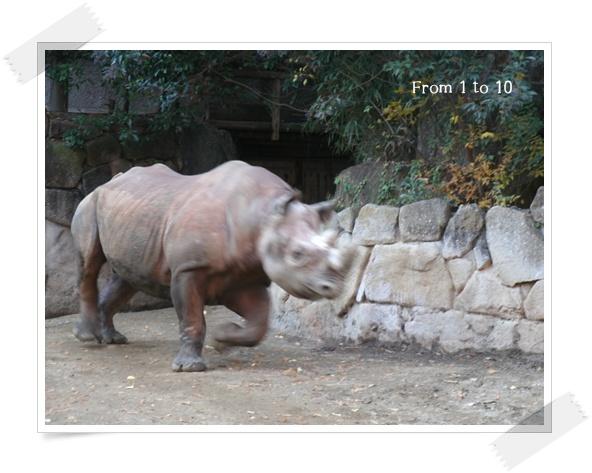 201212上野動物園②