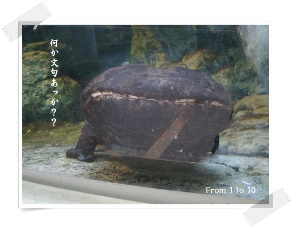 201212上野動物園③