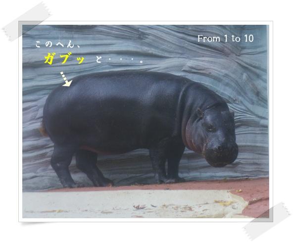 201212上野動物園④