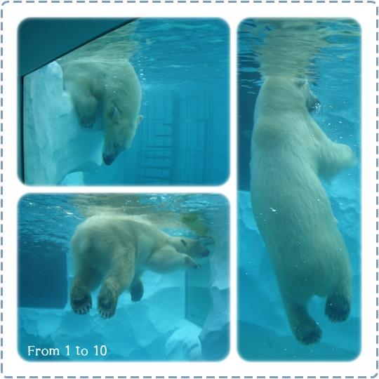 201212上野動物園⑥
