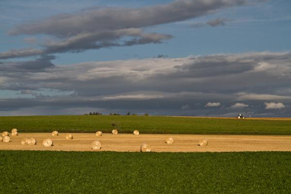 ポポロンの畑