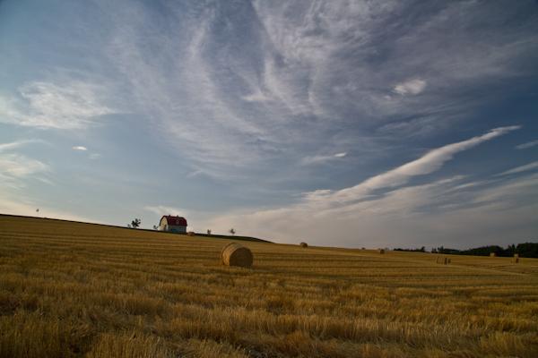 麦のロールと赤い屋根の小さな畜舎
