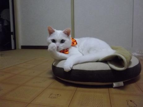 ハロウィンコスふきちゃん7