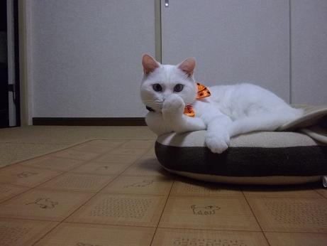 ハロウィンコスふきちゃん6
