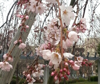 2013-03-17-20-56-59_deco-1.jpg