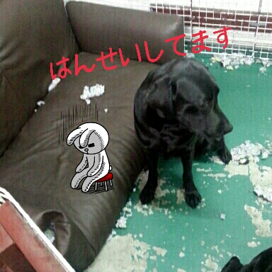 2013-04-25-15-48-50_deco.jpg