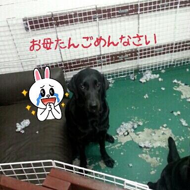 2013-04-25-15-50-03_deco.jpg