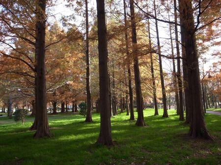水元公園の林