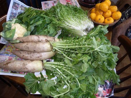 茨城のお野菜