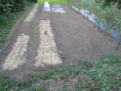 農作業種蒔き 1