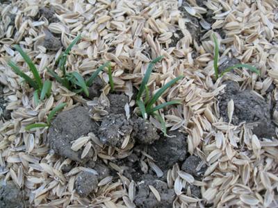 農作業種蒔き 3