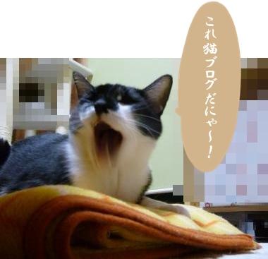 猫ブログだにゃ!