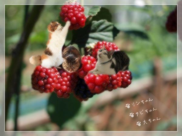 blackberrynoyousei.jpg