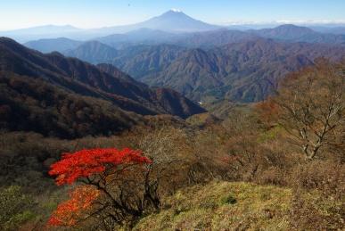 檜洞丸から富士山をのぞむ