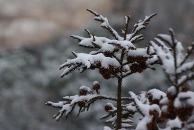 雪のやまざと
