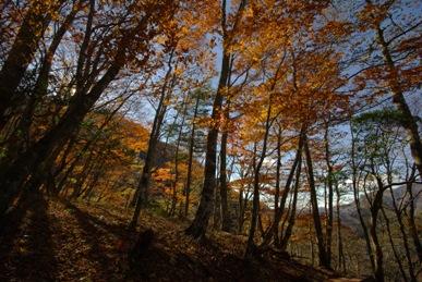 紅葉の雑木林2