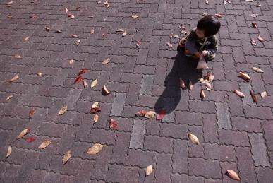 落ち葉と光1