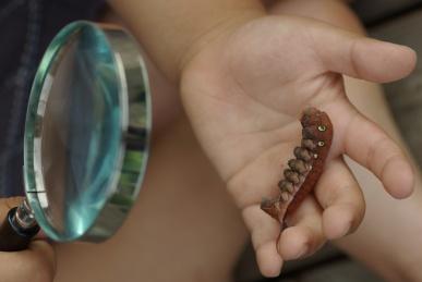 コスズメ幼虫2