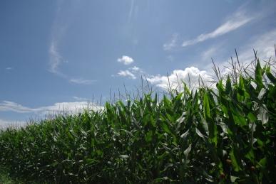 とうきび畑2