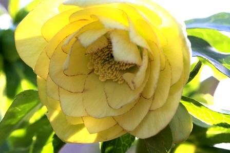 dd yellowpico ws118 2010