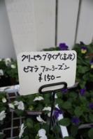 ねふだ 1118 2010
