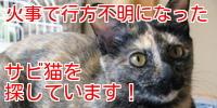 サビ猫あんずバナー