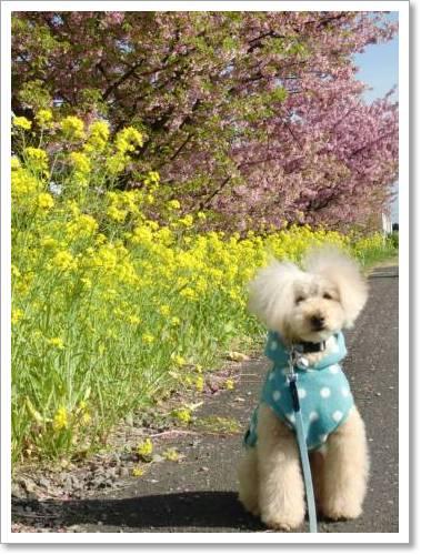 お花見散歩なの♪