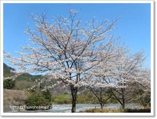 川根2010.3.22 001