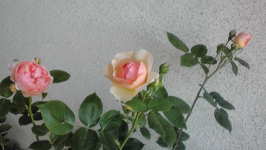 20110519080846_20120325144353.jpg